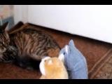 Коты и говорящий хомяк)